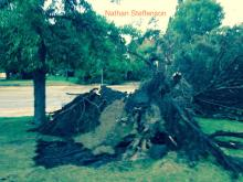 uprooted tree by Brainerd High School S 5th St