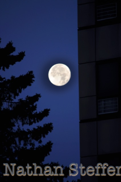 full moon with tree and building