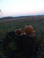 pumpkins near lake Onamia