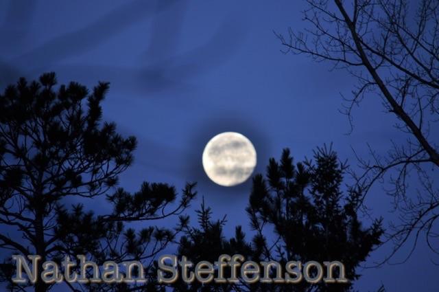 full moon between trees